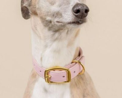 DESIGNER LEATHER DOG COLLAR Bubblegum Pink