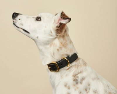 DESIGNER LEATHER DOG COLLAR Black