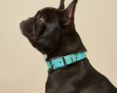DESIGNER LEATHER DOG COLLAR Aqua Blue
