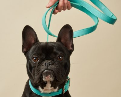 DESIGNER LEATHER DOG LEAD Aqua Blue