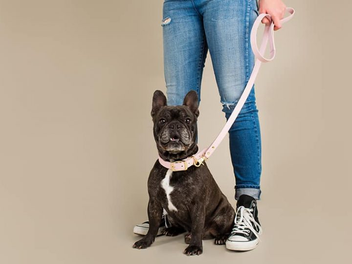 Walk in style with these tips for buying a new dog lead