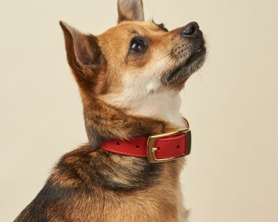 DESIGNER LEATHER DOG COLLAR Furever Red