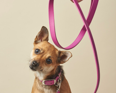 DESIGNER LEATHER DOG LEAD Radiant Orchid