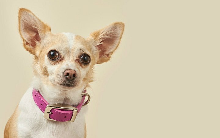 Choosing a new designer dog collar? What to look for and what to avoid