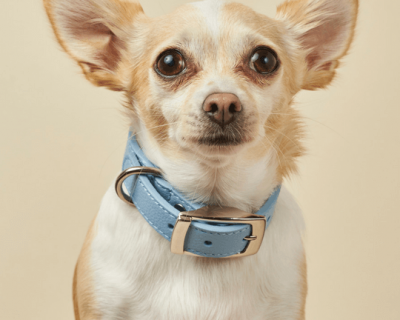 DESIGNER LEATHER DOG COLLAR Baby Blue