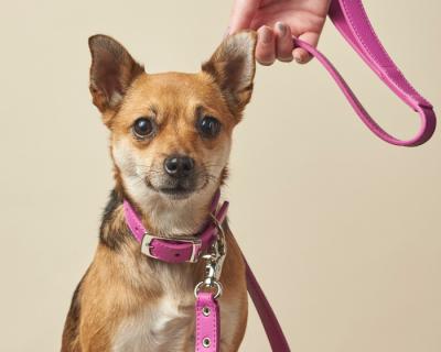 DESIGNER LEATHER DOG SET Radiant Orchid